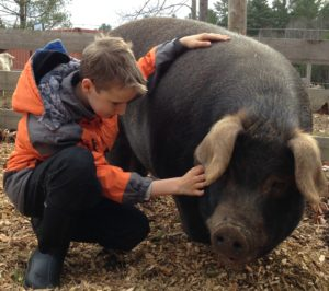 Graze in Peace Farm Animal Rescue in Maine with Henry the Pig