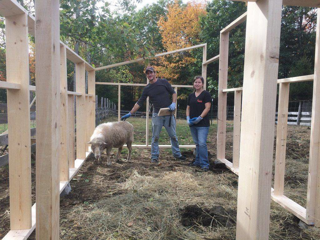 Volunteer at Graze in Peace Farm Animal Rescue in Maine